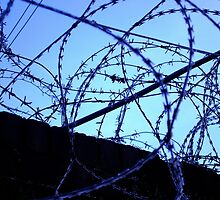 barbed wire by georgemurphy