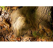 A Patch of Fall Photographic Print