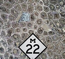 Petoskey Stone, M22, Pure Michigan by James Lady