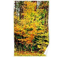 Essential Autumn Color Poster
