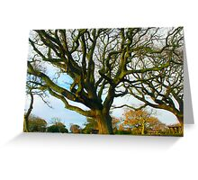 Huge tree in One tree hill, Auckland, New Zealand, NZ Greeting Card