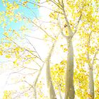 Liquid Amber Sky by ShotsOfLove