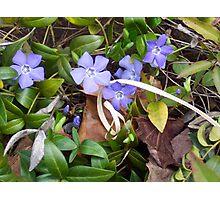 Nature's Ribbon Photographic Print