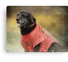 Black Lab in red top Canvas Print