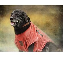 Black Lab in red top Photographic Print