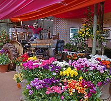Shop display, Table Cape Tulip farm, Tasmania, Australia by Margaret  Hyde