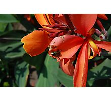 Orange Flower with Beetle Photographic Print