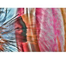 Paint My Tulip Photographic Print