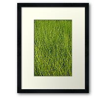 Abstract in Grass Framed Print