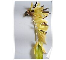 Leaf Art Challenge( Indian Chief Head Dress) Poster