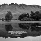 Te Mata Peak - Black & White by Lisa Wilson