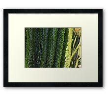 Strange Plantlife - Cactus Garden Barcelona Framed Print