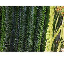 Strange Plantlife - Cactus Garden Barcelona Photographic Print
