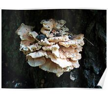 The Chicken of the Woods Mushroom Poster