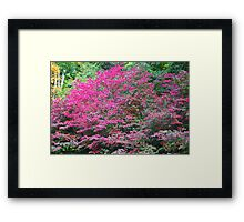Prettiest Purple Shrub Framed Print