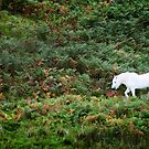 A white horse amongst green and brown ferns by Richard Flint
