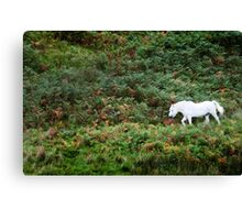 A white horse amongst green and brown ferns Canvas Print