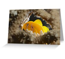 Lemon goby kindergarden Greeting Card