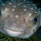 Porcupine fish portrait  by Natalia Pryanishnikova