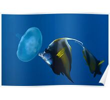 Bannerfish portrait Poster