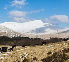 A Snowy Pen Y Fan, Brecon Beacons by Heidi Stewart