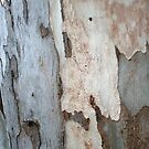 Bark Of A Eucalyptus Tree by taiche