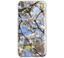 Cherry Trees in Bloom iPhone Case/Skin