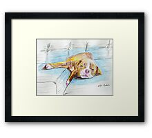 Cute Little Pit Bull Puppy Sleeping on Couch - Painted Sketch Framed Print