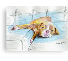 Cute Little Pit Bull Puppy Sleeping on Couch - Painted Sketch Canvas Print