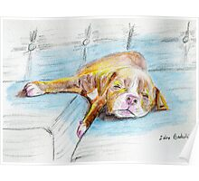 Cute Little Pit Bull Puppy Sleeping on Couch - Painted Sketch Poster