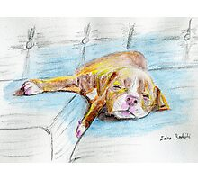 Cute Little Pit Bull Puppy Sleeping on Couch - Painted Sketch Photographic Print