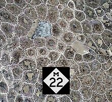 Petoskey Stone, M22 by James Lady