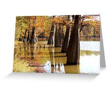 Cypress Autumn Greeting Card