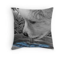 Puppy drinking Throw Pillow