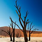 Dead Vlei in Namib Desert by travel4pictures