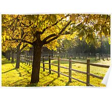Sunny Fall Leaves Poster