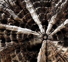 Radial design by Duncan Cunningham