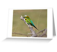 Rainbow Bee Eater Returns for  2013 Greeting Card