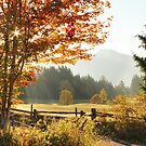 Fall's Meadow by Tracy Friesen