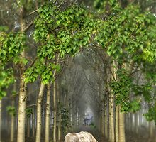 Forest Fantasy by Rosalie Dale