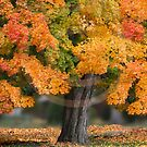 One Glorious Fall! by Leann  Rardin