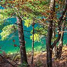 Pink Lake - Gatineau Park, Quebec by Mikell Herrick