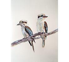 Kookaburras Photographic Print