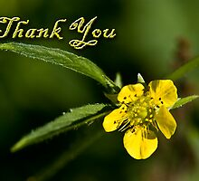 Thank You Buttercup by jkartlife