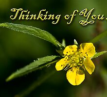 Thinking of You Buttercup by jkartlife