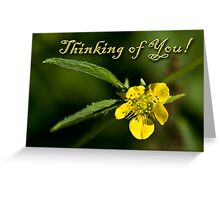 Thinking of You Buttercup Greeting Card