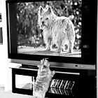 TV Time in Black and White by susan stone