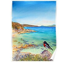 Scarlet Robin on Painted Cliffs, Maria Island Poster