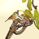 Silvereyes on Fig Tree by melhillswildart