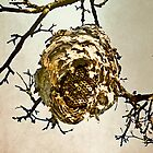 Hornet's Nest by Valerie  Fuqua